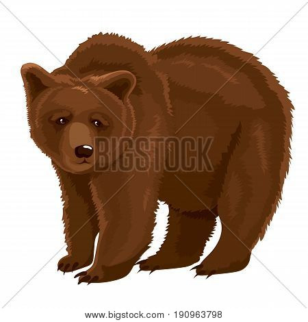 Vector illustration of wild brown bear lives in the woods
