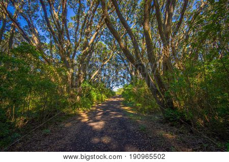 Beautiful passage way to the mountain at volcanic Rangitoto Island, in a sunny day perfect for hiking.