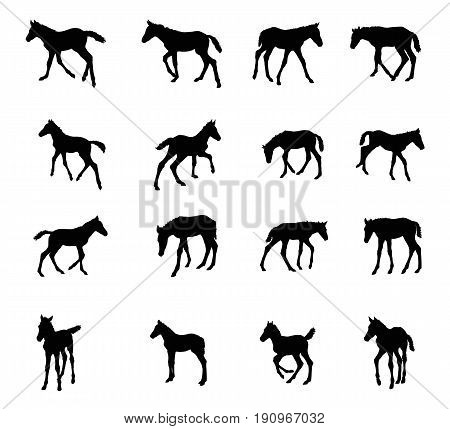 Set of vector standing trotting galloping foals black silhouettes isolated on white background