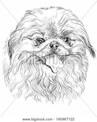 Vector Portrait of Pekingese dog in black color hand drawing Illustration on white background