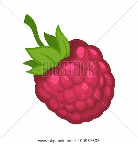 Sweet delicious organic glossy ripe raspberry fruit with small green leaves isolated vector illustration on white background. Berry that grows on bushes for delicious sugary jam preparation.