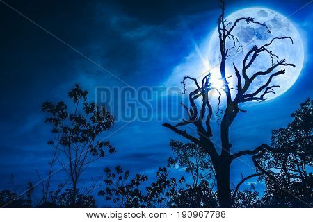 Night Landscape Of Sky With Bright Super Moon Behind Silhouette Of Dead Tree.