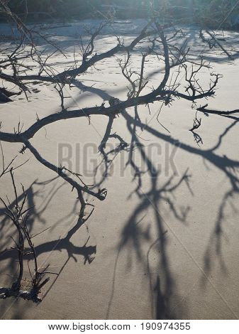 Branches and shadows tangled on quiet beach.