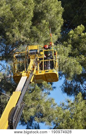 Tree work pruning operations. Crane and pine wood forest.