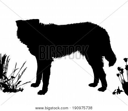 Dog stands sideways. Black silhouette isolated. Vector illustration