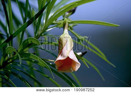 Single bell flower A single flower shaped like a bell hangs from a branch