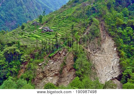 Agriculture terraces field mountain green nature village landscape in Nepal, Annapurna national park.