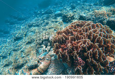 Undersea landscape with coral reef. Coral reef relief. Saltwater wildlife. Tropical seashore animals in wild nature. Exotic island vacation. Sea bottom with young coral ecosystem. Sea snorkeling