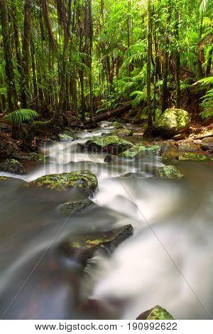 Tamborine Mountain rainforest on the Gold Coast in Queensland, Australia
