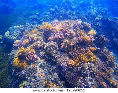 Underwater landscape with coral reef under sunlight. Diverse coral formation with seaweed. Undersea photo of tropical seashore. Sea animals and plants. Exotic seashore. Marine environment untouched