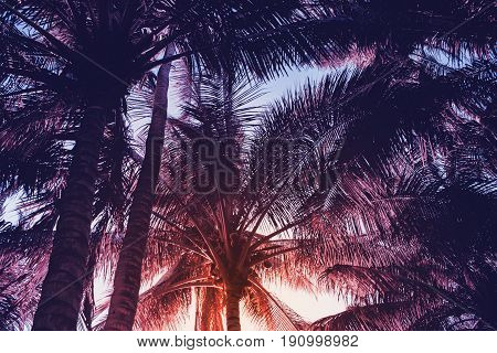 Tropical palm leaf on red sunset sky background. Tropical nature moody style toned photo. Dark green tropical garden in evening sunlight. Coco palm tree on exotic island. Sunset sky banner template