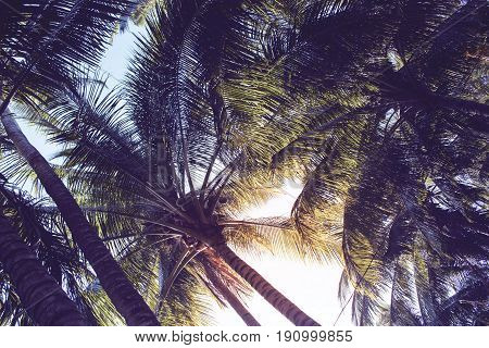 Tropical palm leaf on sunset sky background. Tropical nature moody effect toned photo. Dark green tropical garden in evening sunlight. Romantic sunset on exotic island. Sunset sky banner background