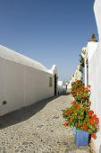 street scene with flowers greek islands santorini greece paros mykonos cyclades architechture poster