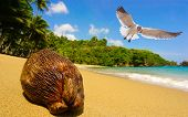 coconut seemingly spotted by a seagull. The scene is an exotic tropical beach. The show is taken at a low angle. poster