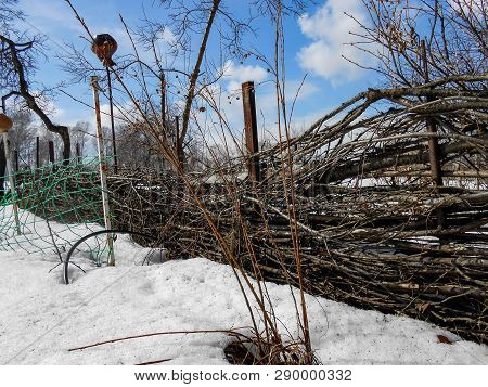 The Beginning Of Spring, Pulling Up The Ice Crust On The Snow, Countryside, Bare Trunks Of Birches,