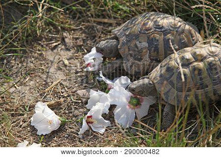 Turtles Eating Flowers