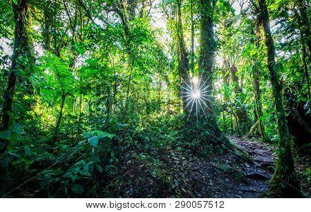 Cloud Forest Scenery In Dense Jungle. Santa Elena Area, Costa Rica.
