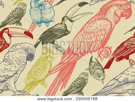 Tropical Birds. Parrots And Toucans. Seamless Vector Background. Wildlife Pattern. Retro Vintage. Ol