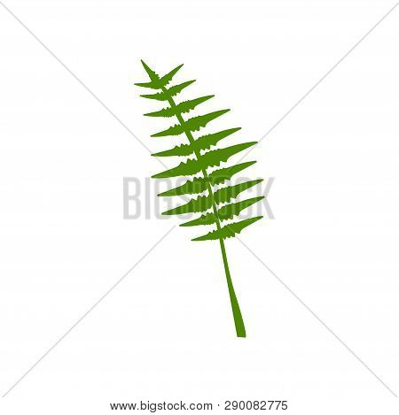 Exotic Tropical Feathery Palm Leaf, Botanical Design Element Vector Illustration