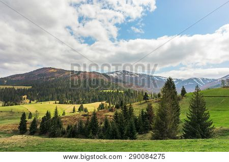 Beautiful Springtime Landscape In Mountains. Spruce Trees On The Grassy Meadows And Hills. Cloudy We