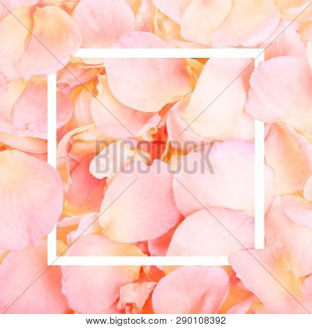 Pink Rose Petals. Valentines Day Background. Flat Lay, Top View