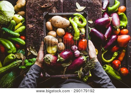 Organic Vegetables. Farmers Hands With Freshly Harvested Vegetables. Fresh Organic Zucchini. Overhea