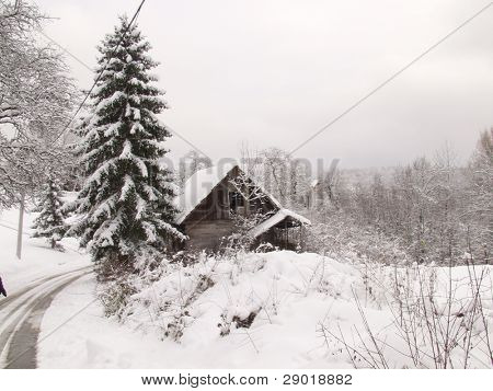 Cottage underneath a pine tree covered with snow