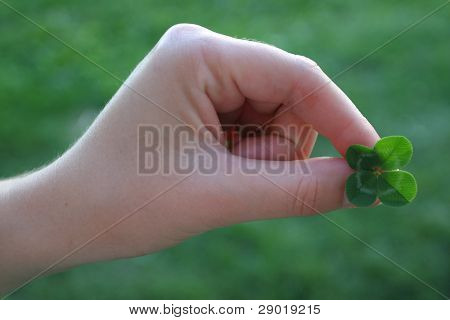 Fourleafed clover, symbol of luck in female hand