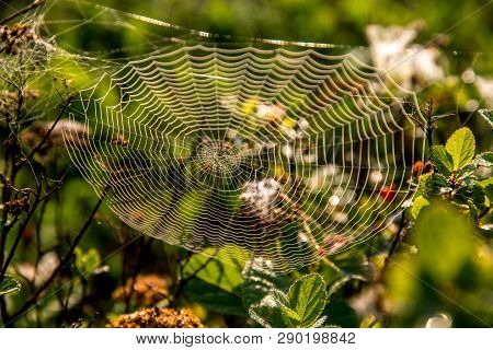 Shining Water Drops On Spider Web On Green Forest Background In Latvia. Spider Net In Nature.