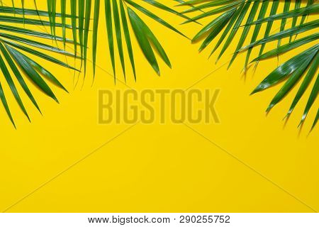 Green Leaves Of Palm Tree On Yellow Background. Flat Lay Minimal Nature Style Of Tropical Palm Leave