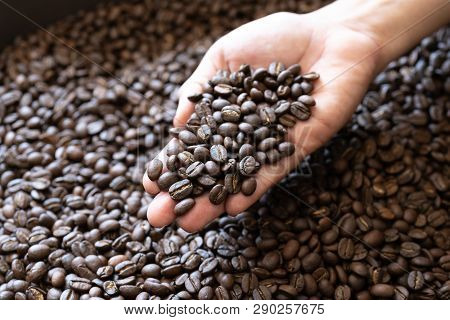 Coffee Beans Roasted Coffee Beans On Woman Hand Background Texture