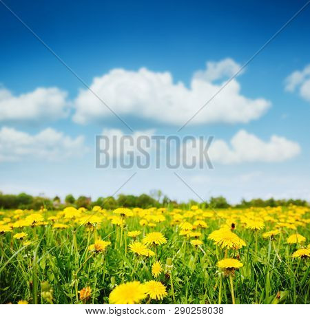 Fantastic field with dandelions and blue sky. Location place Ukraine, Europe. Sunny weather on a warm summer day. Fresh seasonal background. Concept of the ecology. Discover the beauty of earth.