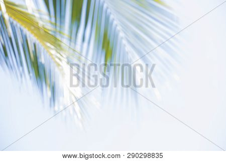 Abstract Blur Of Coconut Leaf, Palm Leaf White Background,palm Leaves On Sky Background,palm Leaves