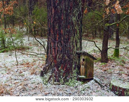 Broken Old Birdhouse In The Forest Near The Pine