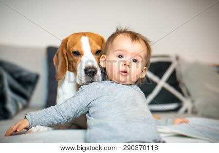 Baby With A Beagle Dog In Home