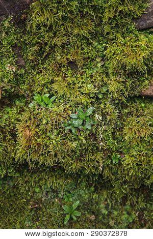 Moss Texture. Moss Background. Green Moss On Grunge Texture
