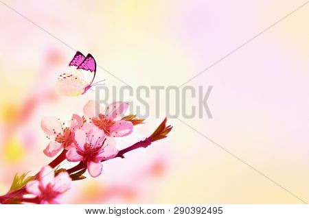 Beautiful Floral Spring Abstract Background Of Nature And Butterfly. Branch Of Blossoming Peach On L