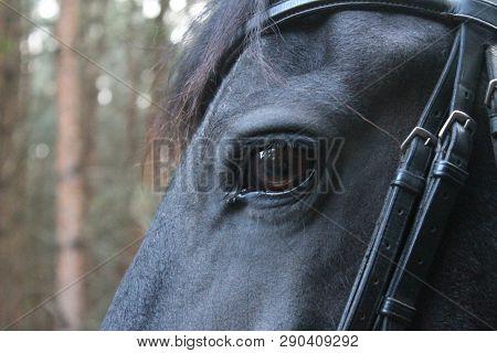 Het Oog Van Een Paard Dat Rustig Door Het Bos Aan Het Wandelen Is.