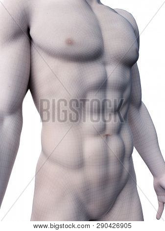 3d rendered medically accurate illustration of sixpack abs