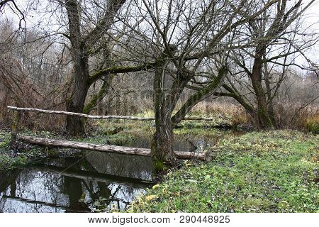 Among Trees And Bushes, Between Green Coast The Small River With Dark Water Flows. Between Coast The