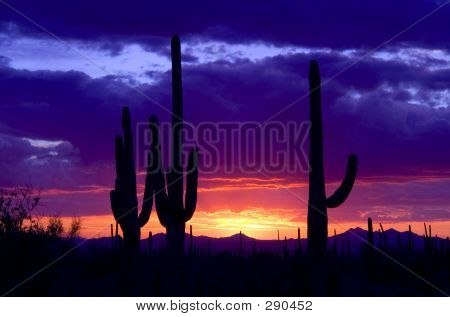 Cold Desert Sunset