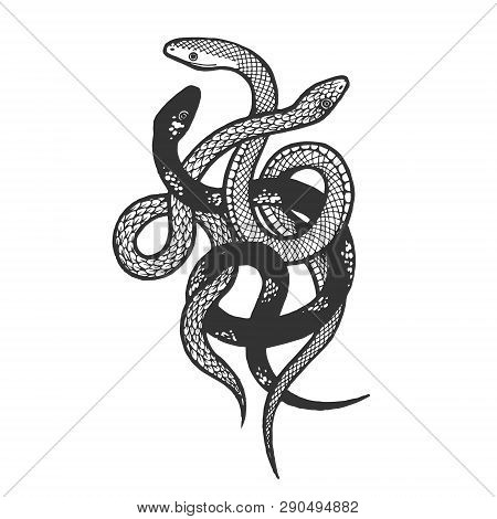 Binded Snakes Sketch Engraving Vector Illustration. Scratch Board Style Imitation. Hand Drawn Image.