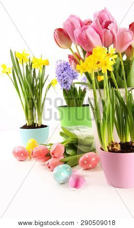 Colorful spring flowers for Easter in white background