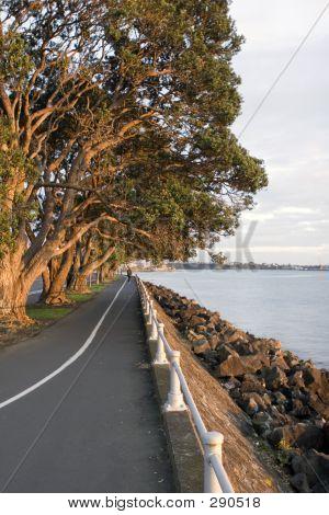 Playa de Auckland