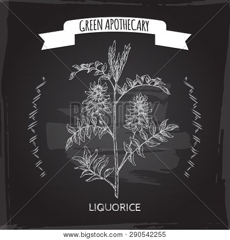 Glycyrrhiza Glabra Aka Liquorice Sketch On Black. Green Apothecary Series.