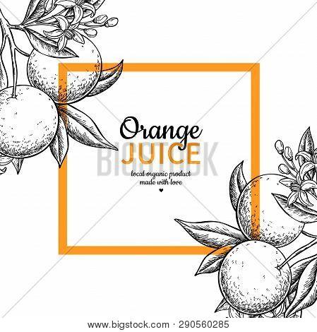 Orange Label Vector Drawing. Citrus Fruit Engraved Frame Template. Hand Drawn Summer
