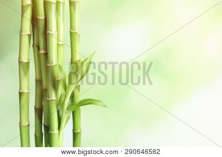 Green Bamboo Stems On Blurred Background, Space For Text. Zen, Balance, Harmony