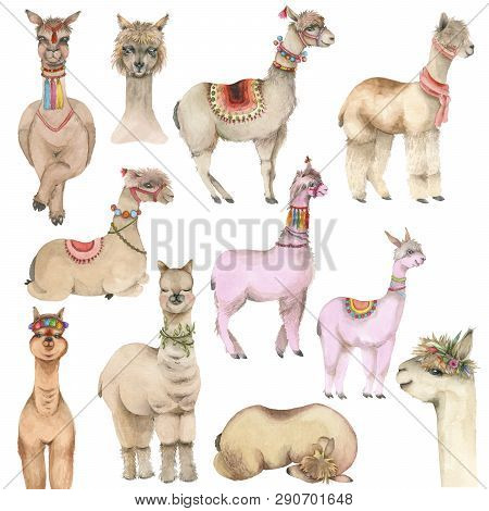 Set Of Cartoon Watercolor Lama. Cute Hand Drawn Funny Illustration Of Lama. Collection Perfect For P