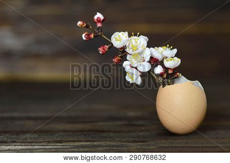 Easter card with spring flowers in eggshell on wooden background poster