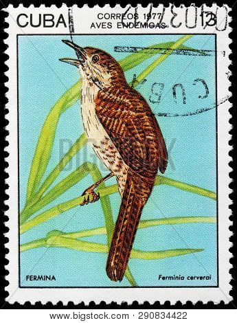 Luga, Russia - February 17, 2019: A Stamp Printed By Cuba Shows Zapata Wren - A Medium Sized Grayish